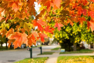 Fall Colors_Small